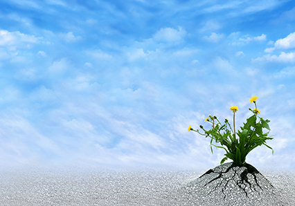 Flower poking through gravel